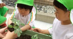 お野菜植えたよ【ぴよぴよPleco有松】